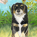 Tri Colored Dachsund Mix Dog Canine Pets Animal Art by Cathy Peek