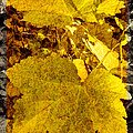 Tribute To Autumn by Jordan Blackstone