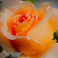 Tricia's Rose 8.6.14  by Daniel Thompson