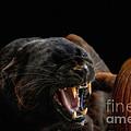 Trick Or Treat by Wildlife Fine Art