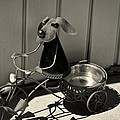 Tricycle Dog by John Hoey