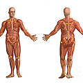 Trigger Points On The Human Body by Spencer Sutton