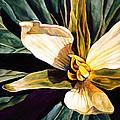 Trillium by Lynda Hoffman-Snodgrass