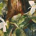 Trillium Woods 3 by Duane Barnhart