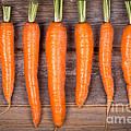 Trimmed Carrots In A Row by Jane Rix