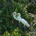 Trio Of Egret Love by Dale Powell
