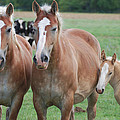 Trio Of Horses 2 by Tracy Winter