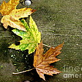 Trio Of Leaves by Marilyn Smith