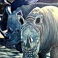 Trio Of Rhino by Caroline Street