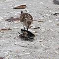 Trio Of Shore Birds by Doris Potter