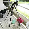 Tripod And Roses On Floor by Rich Franco
