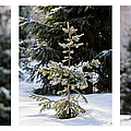 Triptych - Christmas Trees In The Forest - Featured 3 by Alexander Senin