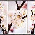 Triptych Light Of Spring 1 by Alexander Senin