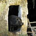 Troglodyte Pig by Randi Kuhne