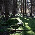 Troll's Grave by Valerie Kirkwood