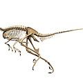 Troodon Dinosaur Skeleton by Jose Antonio Pe�as