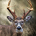 Trophy 10 Point Buck by Mary Almond