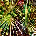 Tropical Abstract by Stephen Warren