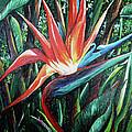 Tropical Bird  by Karin  Dawn Kelshall- Best