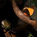 Tropical Butterfly And Rhinoceros Beetle by Douglas Barnett