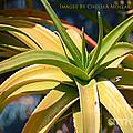Tropical Cactus by Chelsea Mollak