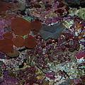 Tropical Coral by Robert Floyd