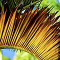 Tropical Curves by Christi Kraft