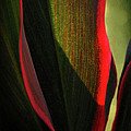 Tropical Curves by Ellen Cotton