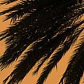 Tropical Dream by Ricky Barnard