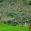 Tropical Entanglement by Robert Meyers-Lussier