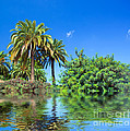 Tropical Exotic Jungle And Water by Michal Bednarek