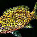 Tropical Fish Art 14 By Sharon Cummings by Sharon Cummings