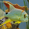 Tropical Fish by Tonya Hance