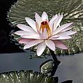 Tropical Floral Elegance by Byron Varvarigos