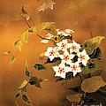 Tropical Flower by Haruyo Morita