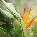Tropical Flower by Natalie Kinnear