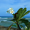 Tropical Flowers by Catie Canetti