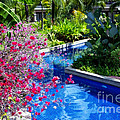 Tropical Garden Around Pool by Kaye Menner