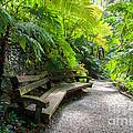 Tropical Garden by Kim Pin Tan