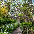 Tropical Garden. Mauritius by Jenny Rainbow