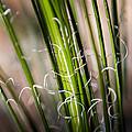 Tropical Grass by John Wadleigh