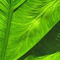 Tropical Green by Deborah Smith