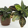 Tropical Houseplant by Lee Serenethos
