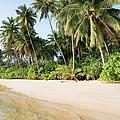 Tropical Island Beach Scenery by Artur Bogacki