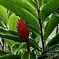 Tropical by Kelley Belisle