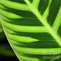 Tropical Leaf by Art Block Collections