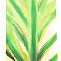Tropical Leaf by C Sitton