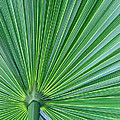 Tropical Leaf by Carolyn Stagger Cokley