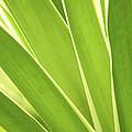 Tropical Leaves by Elena Elisseeva