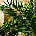 Tropical Leaves by Lourry Legarde